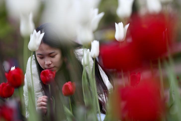 资料图片:2017年4月,伦敦,一名女子在Regents公园赏花。REUTERS/Neil Hall