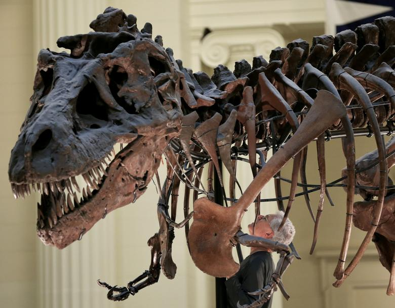 FILE PHOTO - Bill Simpson looks inside a fossil of a Tyrannosaurus rex known as ''SUE'', before removing its forelimb to be used for research at the Field Museum in Chicago, Illinois, U.S. on October 6, 2016. REUTERS/Jim Young/File Photo