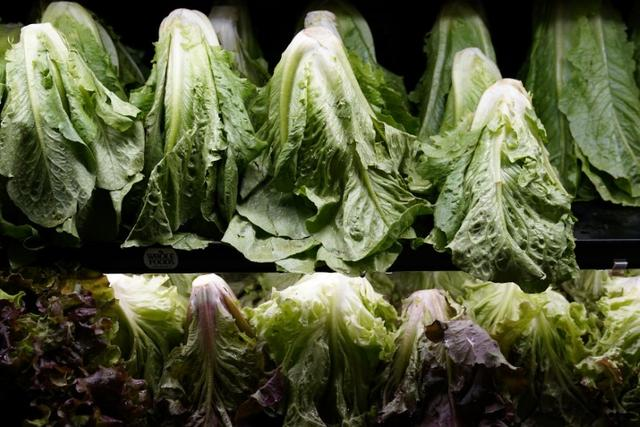 Lettuce for sale is pictured inside a Whole Foods Market in the Manhattan borough of New York City, New York, U.S. June 16, 2017.   REUTERS/Carlo Allegri