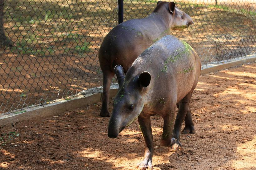 Police believe thieves steal venezuela zoo animals to eat - Colorazione pagine animali zoo ...