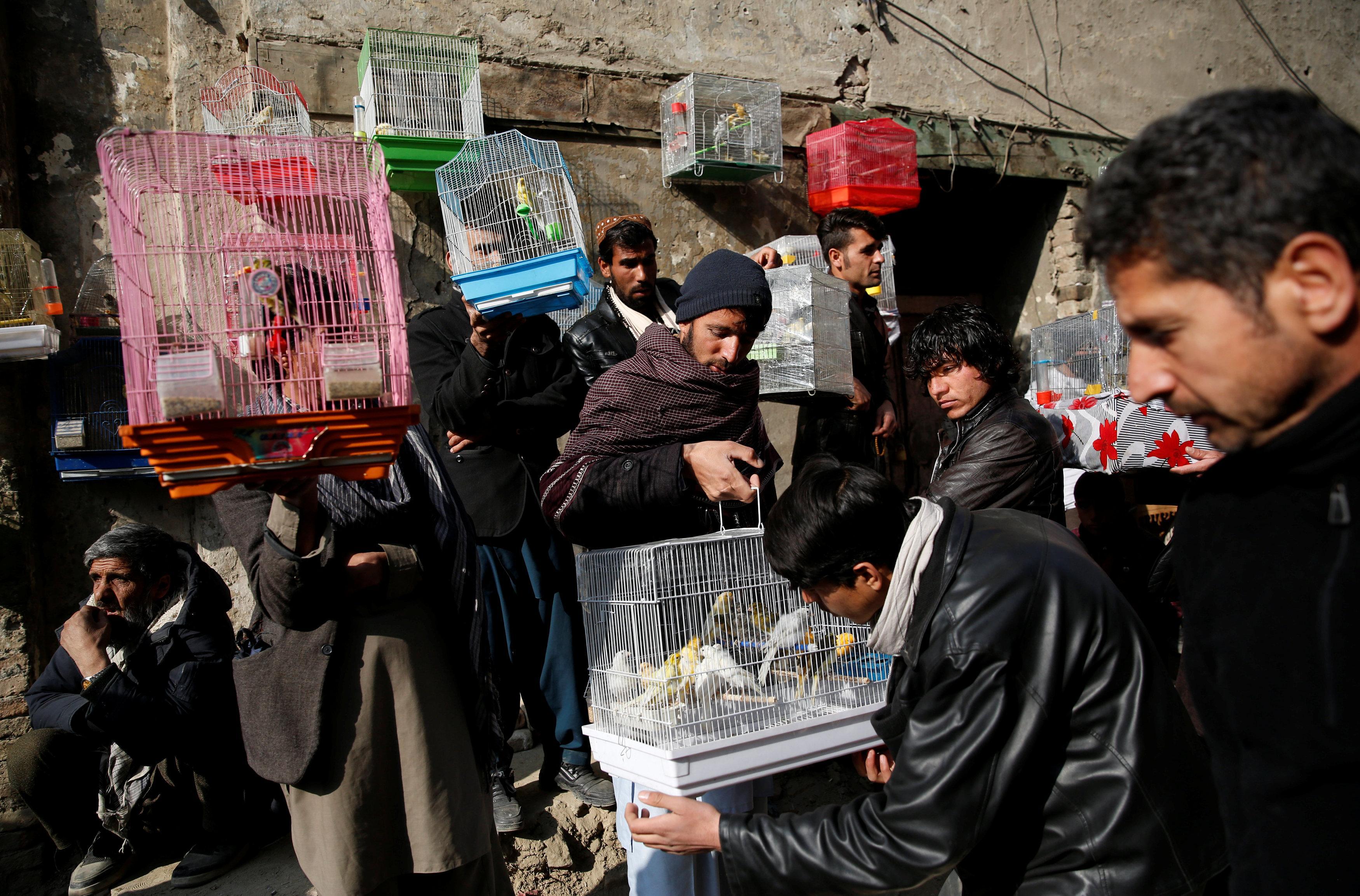 Image result for Ka Faroshi bird market