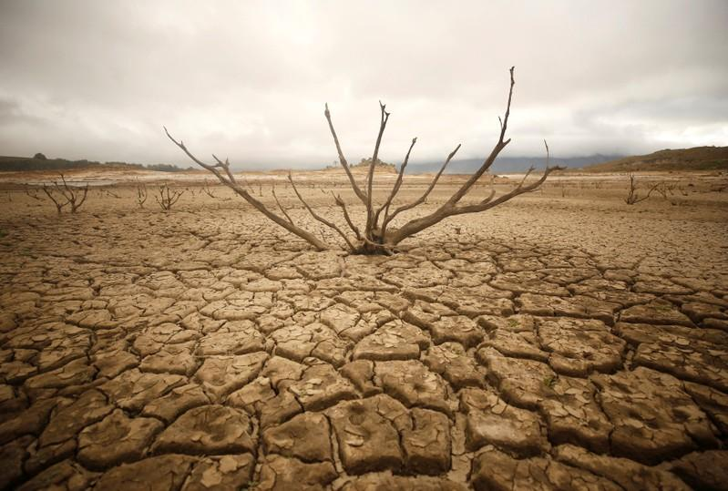 south africa declares drought a national disaster reuters
