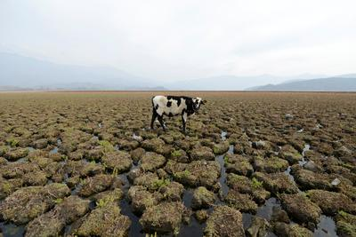 Lagoon dries up in Chile