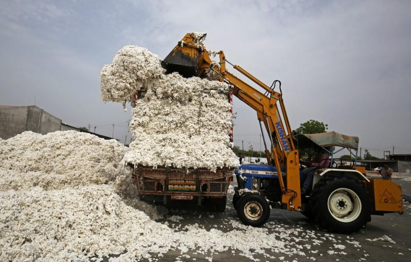 India likely to export 7 m bales of cotton this year