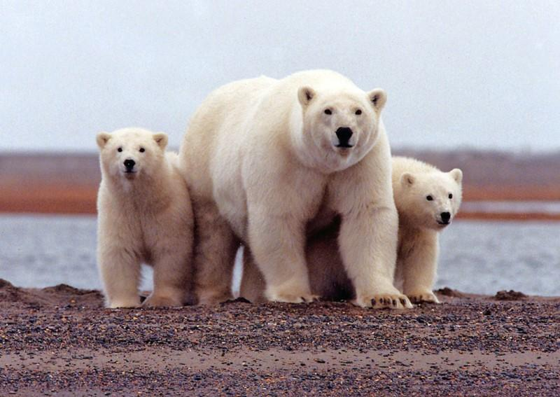 Construction planned to prepare Alaska's Arctic refuge for