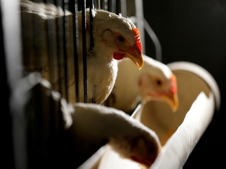 China slaps anti-dumping deposit on Brazilian chicken - Reuters
