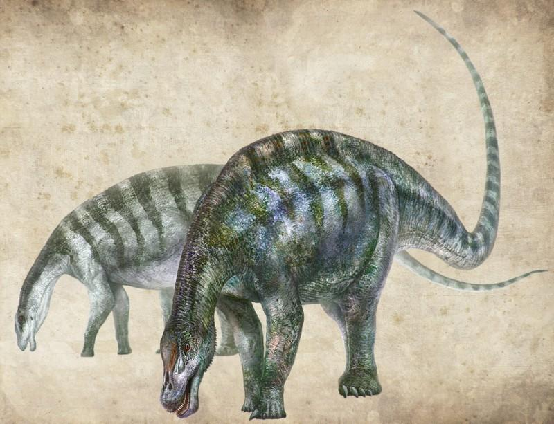 Amazing Dragon Fossils Rewrite History Of Long Necked Dinosaurs