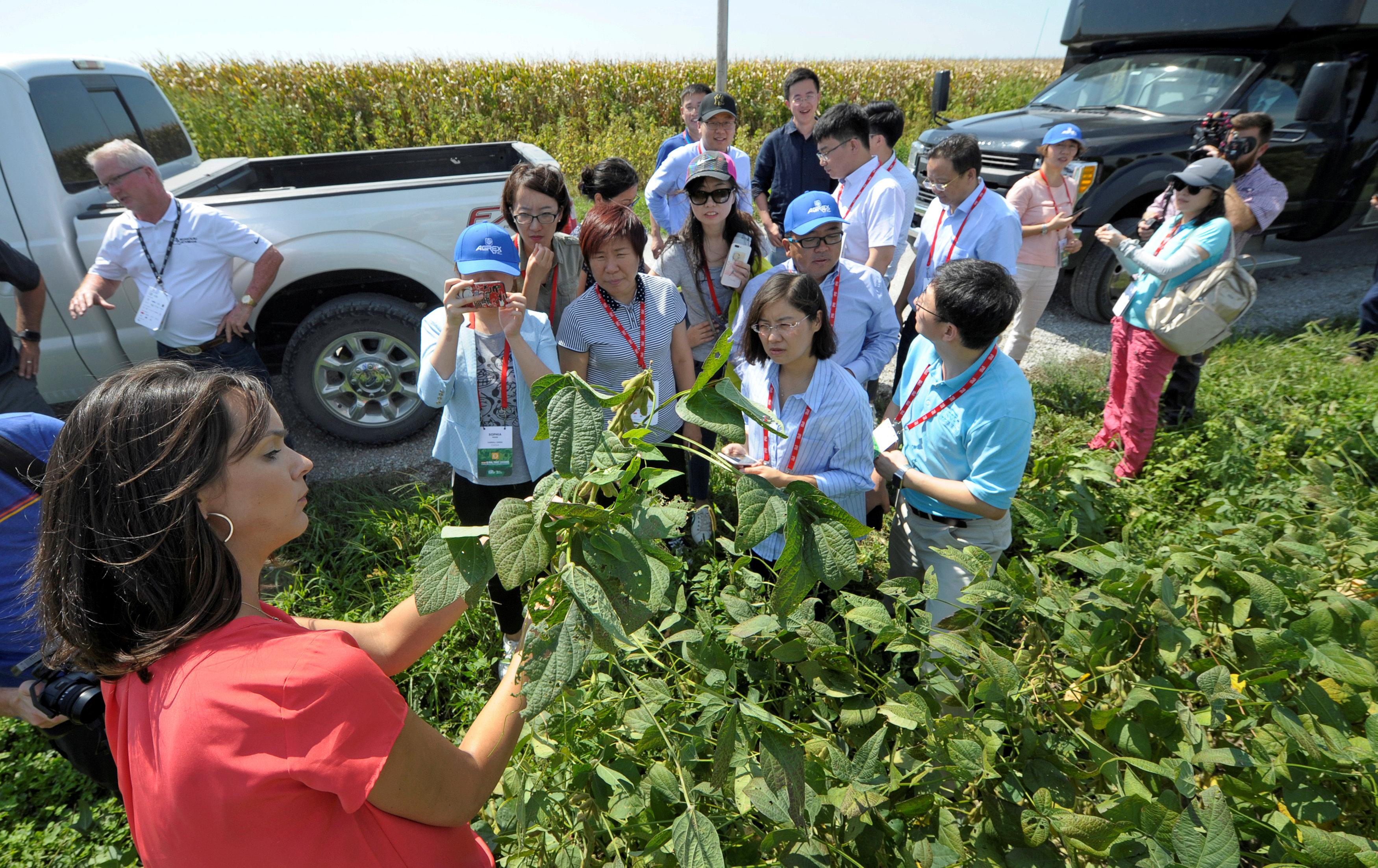Meagan Kaiser pulled up a soybean plant to show to a Chinese trade delegation during a tour of the Kaiser farm near Norborne, Missouri, U.S., August 28, 2018.  Dave Kaup
