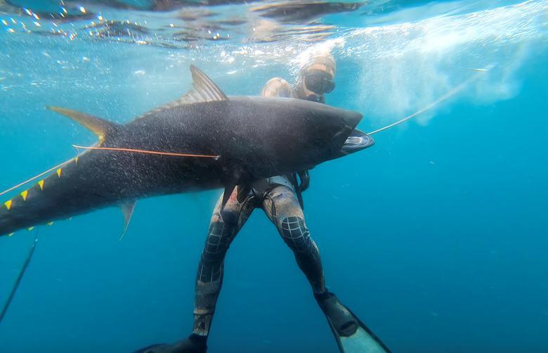 Big bluefin tuna make California comeback after 80-year hiatus