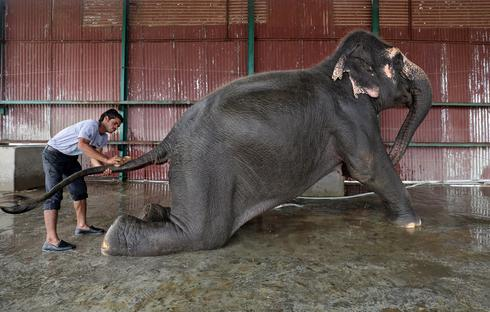 A hospital for elephants