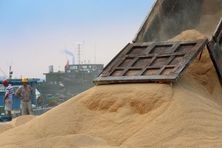 中国、米国産大豆50万トン購入 首脳会談以降初の大量調達=取引業者