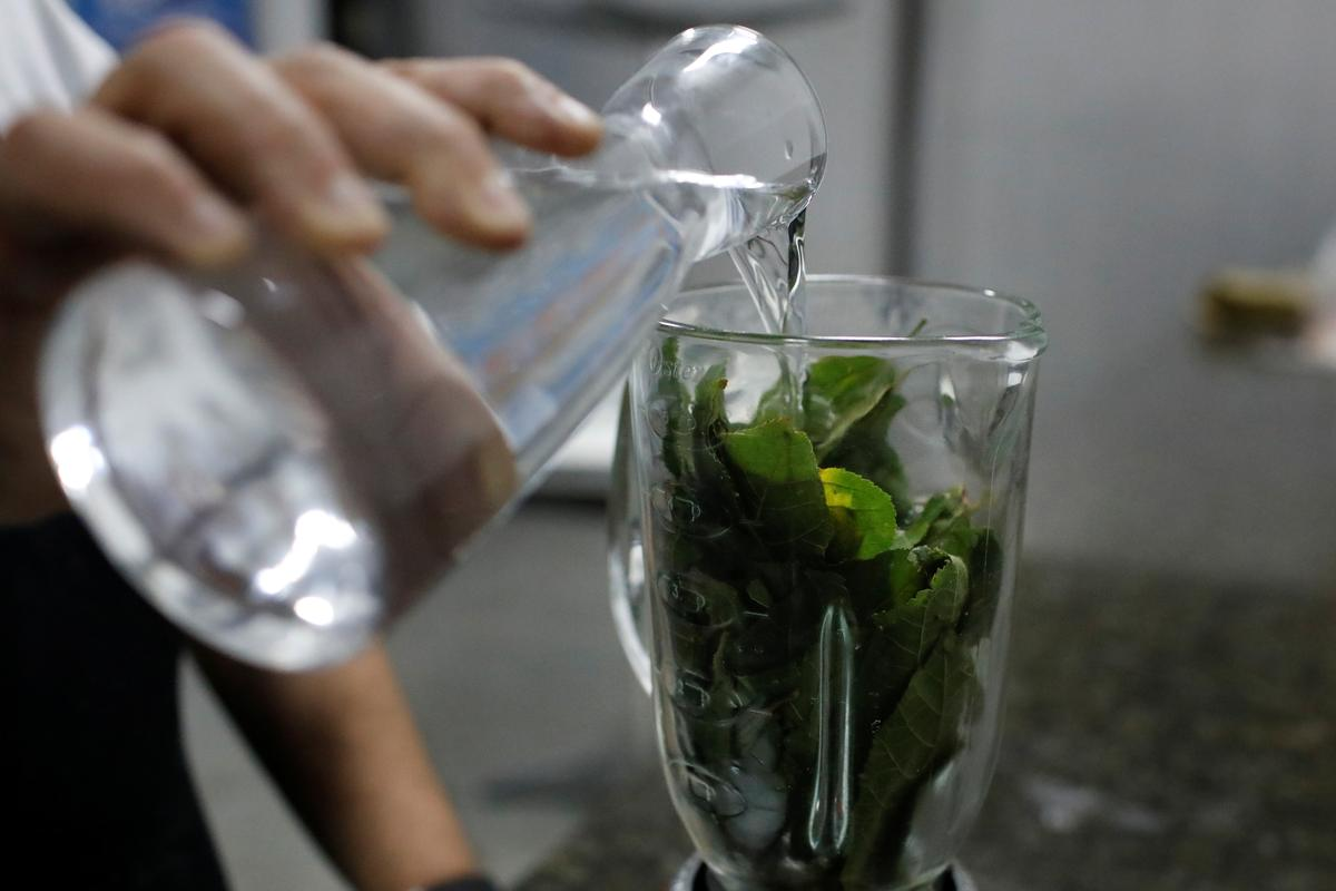 With no antiretrovirals, Venezuela HIV patients rely on leaf remedy