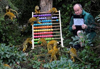 Counting animals at London Zoo