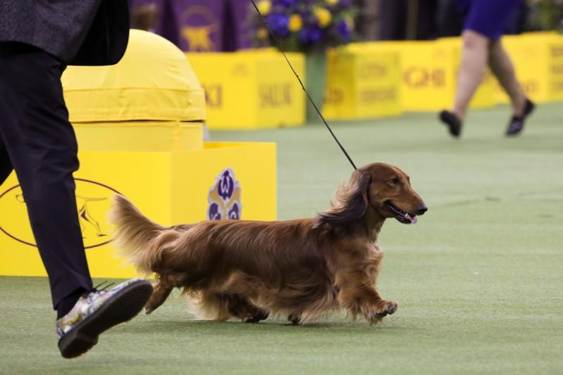 Image result for Dogshow