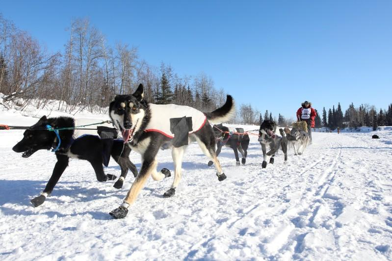Scaled-down Iditarod sled dog race set to start in Anchorage