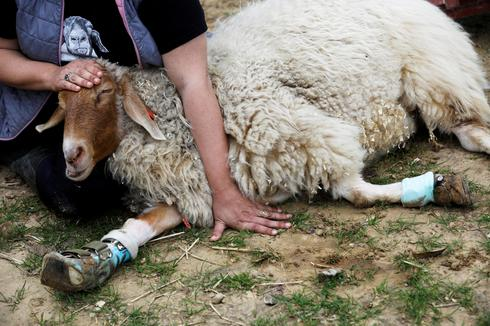 Disabled animals find refuge at Freedom Farm