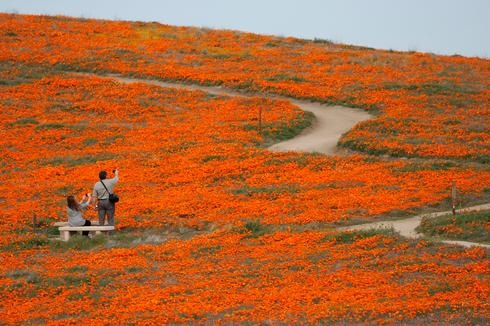Superbloom in southern California