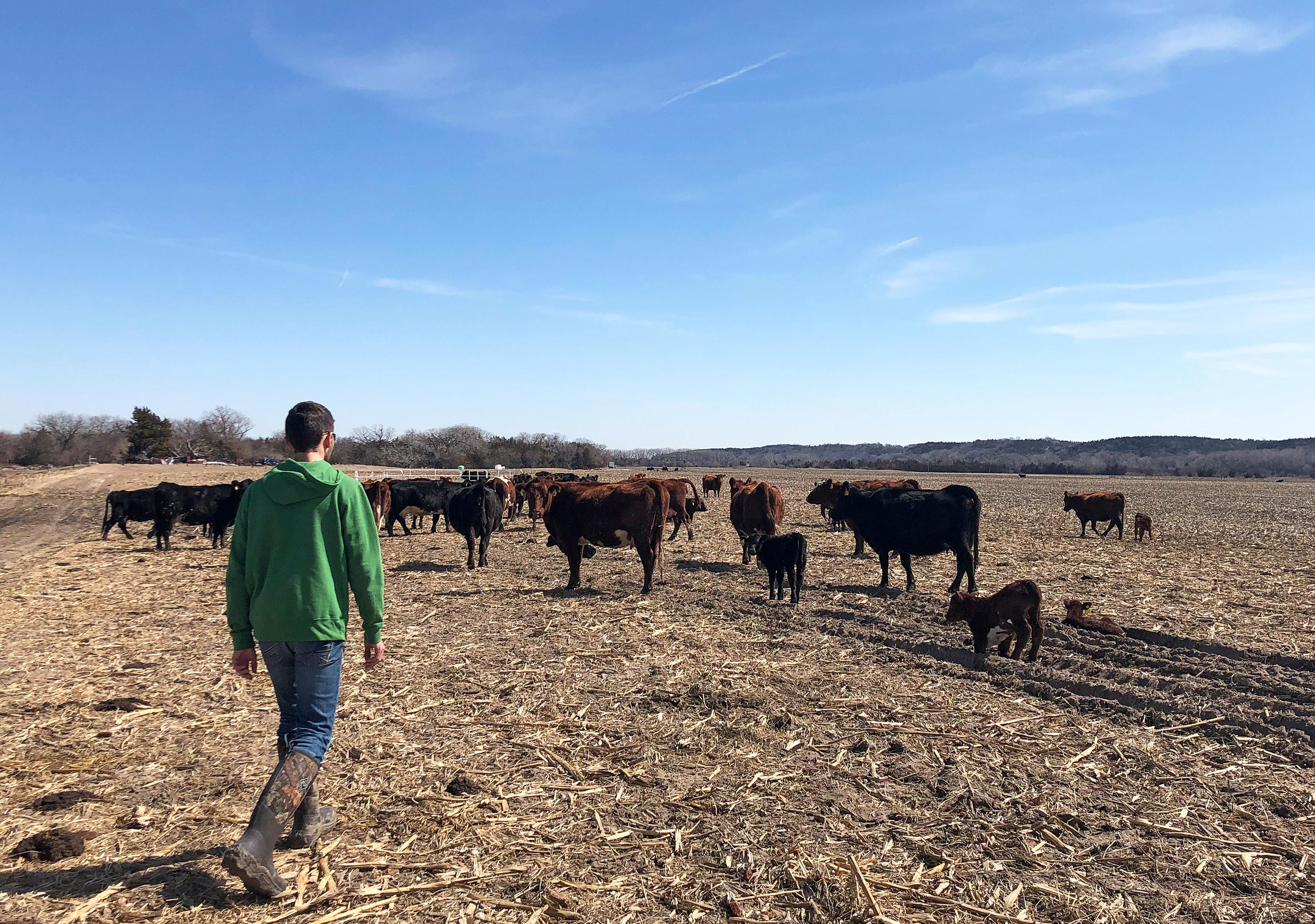 Exclusive: More than 1 million acres of U S  cropland