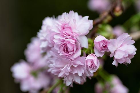 一周图片精选(3月25-31日)