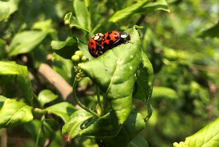California ladybug swarm dozens of miles wide shows up on radar