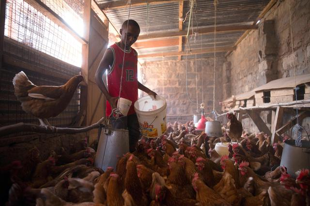 From poo to food: Kenyan toilet waste key for new animal