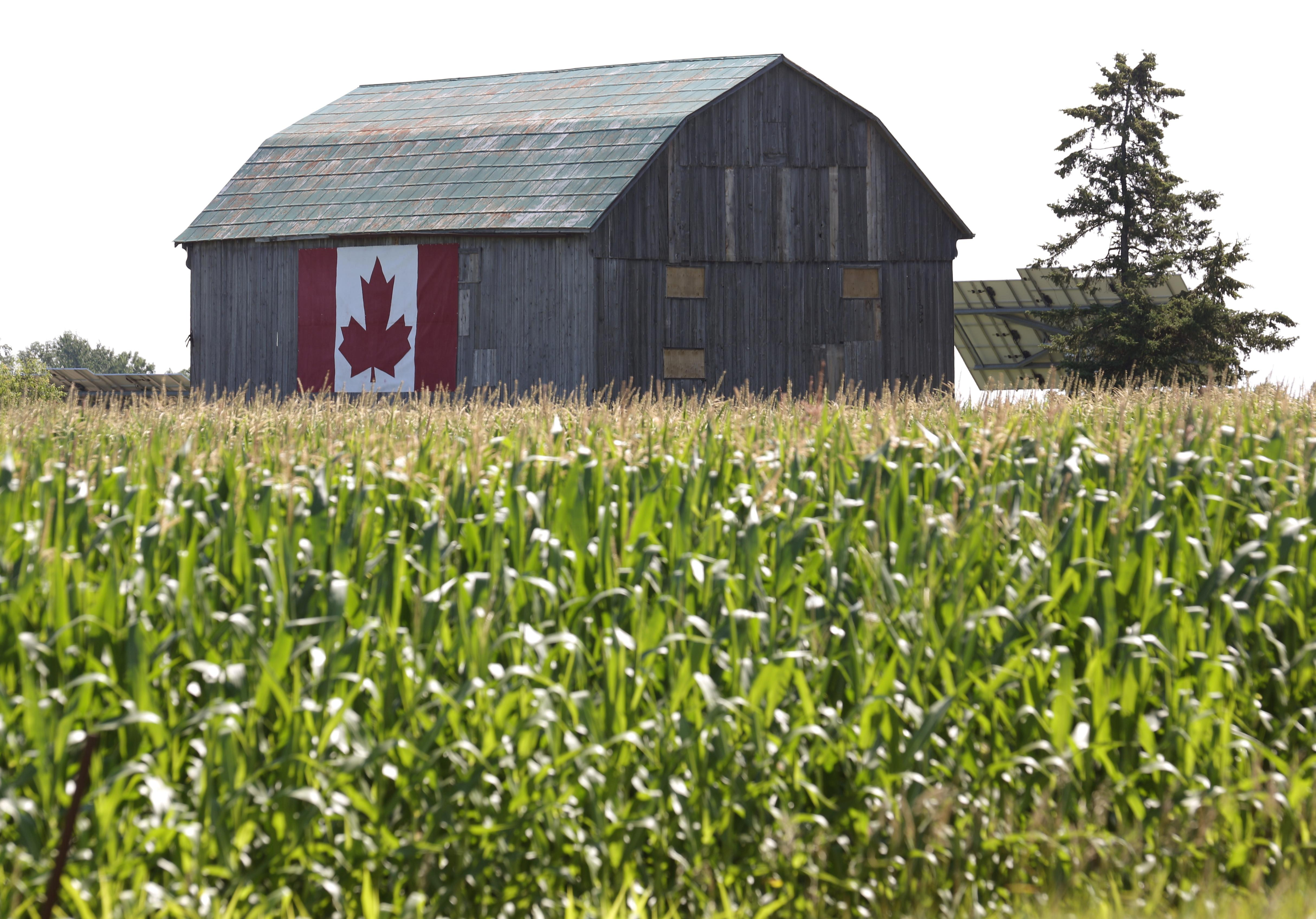 China snub, drought and debt shake finances of Canada's farmers