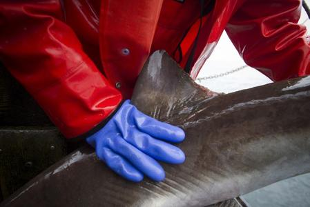 Canada becomes first G20 country to ban trade in shark fins