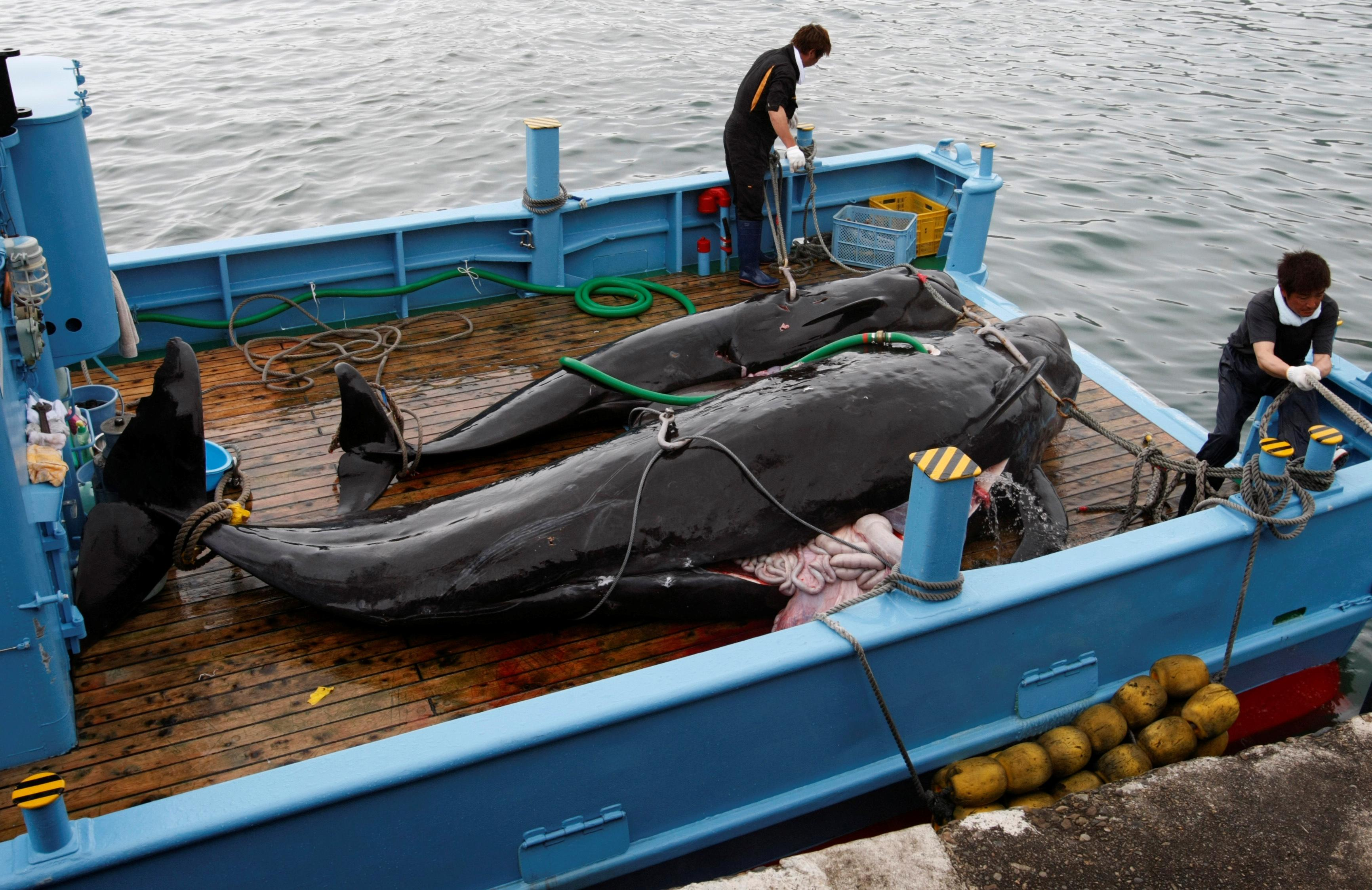 Explainer: What's behind Japan's support of whaling?