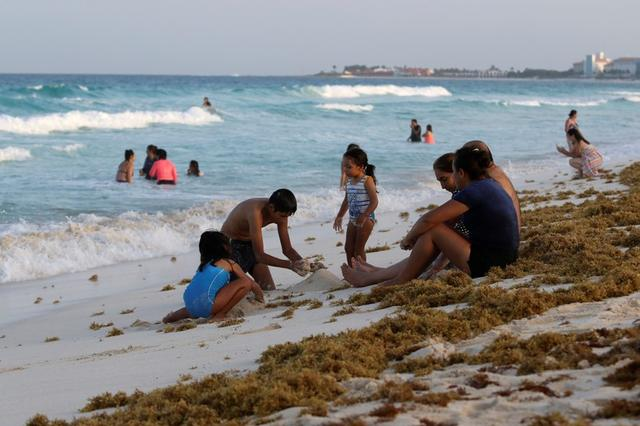 Seaweed washing up on Mexico's top beaches a 'minor' problem