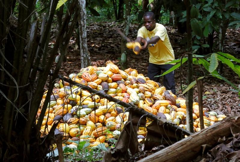 Cocoa-growing Ivory Coast draws up new plan to stop child labour