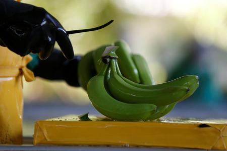 Colombia puts some banana crops in quarantine on fungus concern