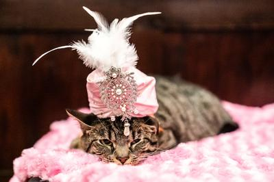 Kitty couture at New York cat fashion show