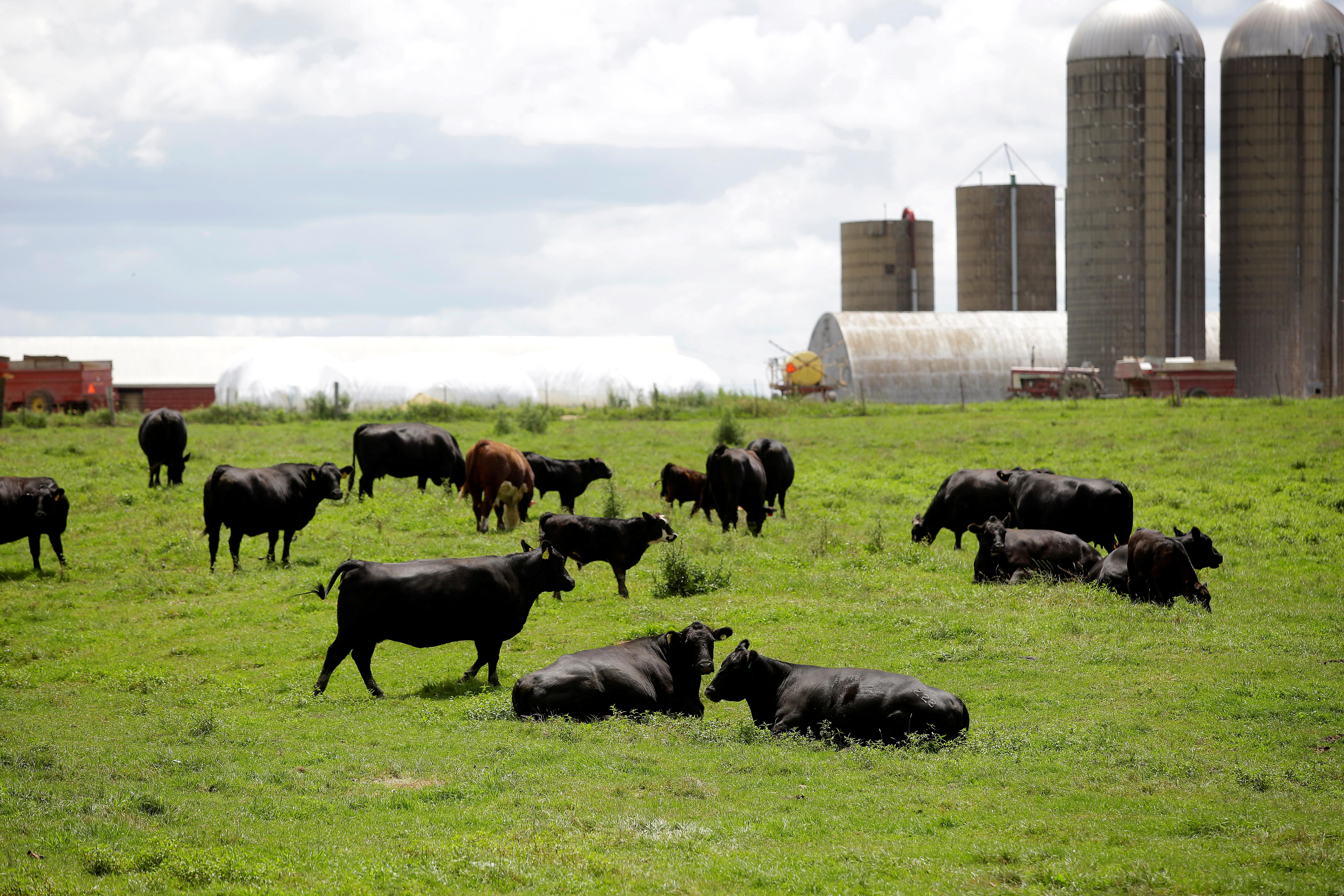 U.S. cows and pigs gorge on bakery rolls, pet food as corn prices...