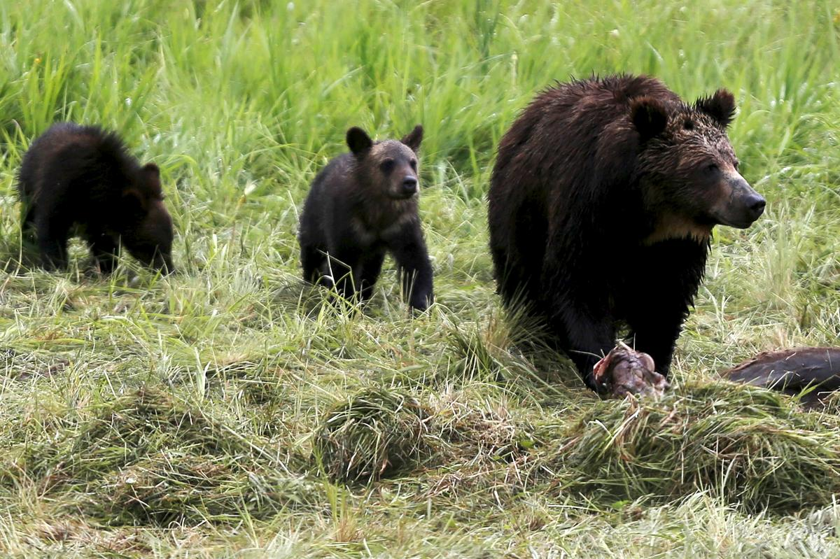 Trump Administration weakens U.S. wildlife protections, states and conservationists to sue