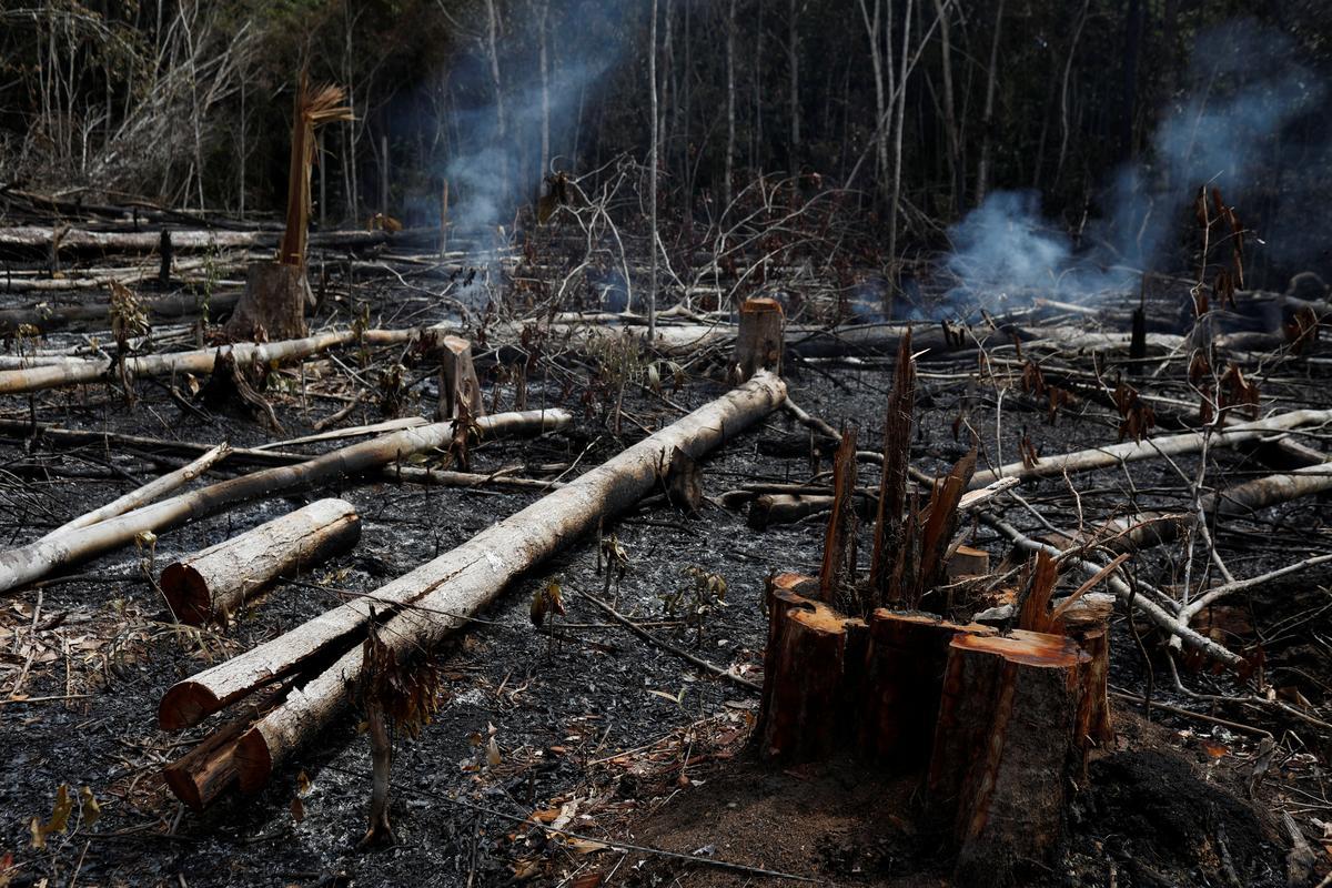 Met die ontwrigting van wêreldwye verontwaardiging blameer die Bolsonaro in Brasilië NGO's vir brande in Amazon
