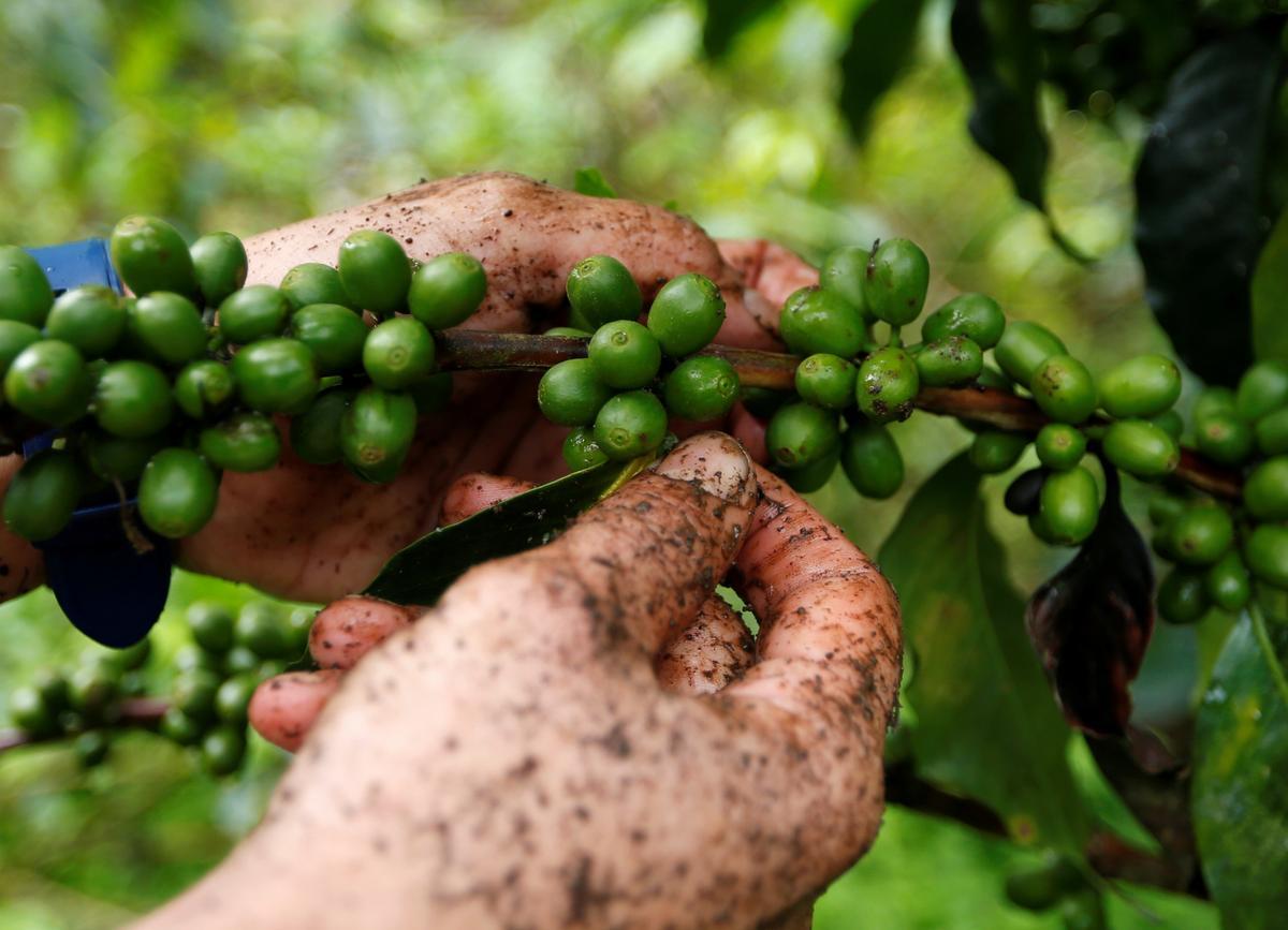 Die app lyk om wenke te kry van koffiedrinkers aan produsente in Colombia
