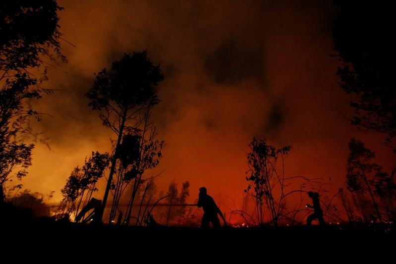 Indonesia government considering harsher punishments for forest...