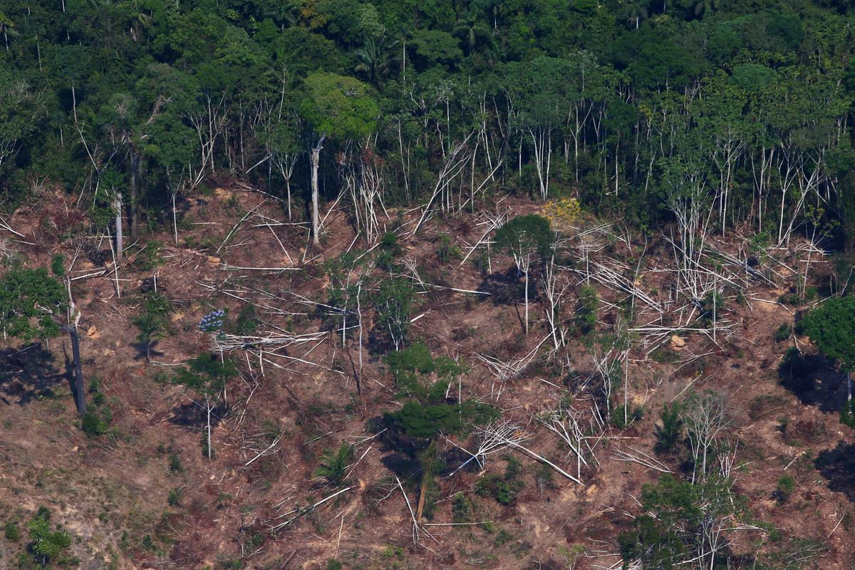 Sonder Brasilië ontsluit skenkers $ 500 miljoen om reënwoude te bewaar