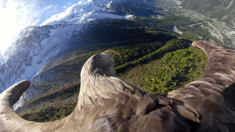 Victor the eagle's bird's eye view of the Alps raises climate...