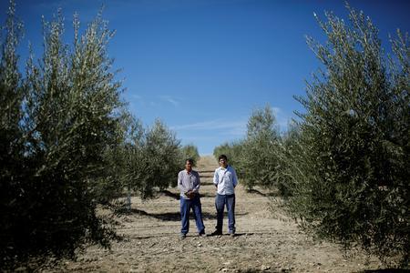 U.S. tariffs threaten livelihoods of Spain's olive-farming families