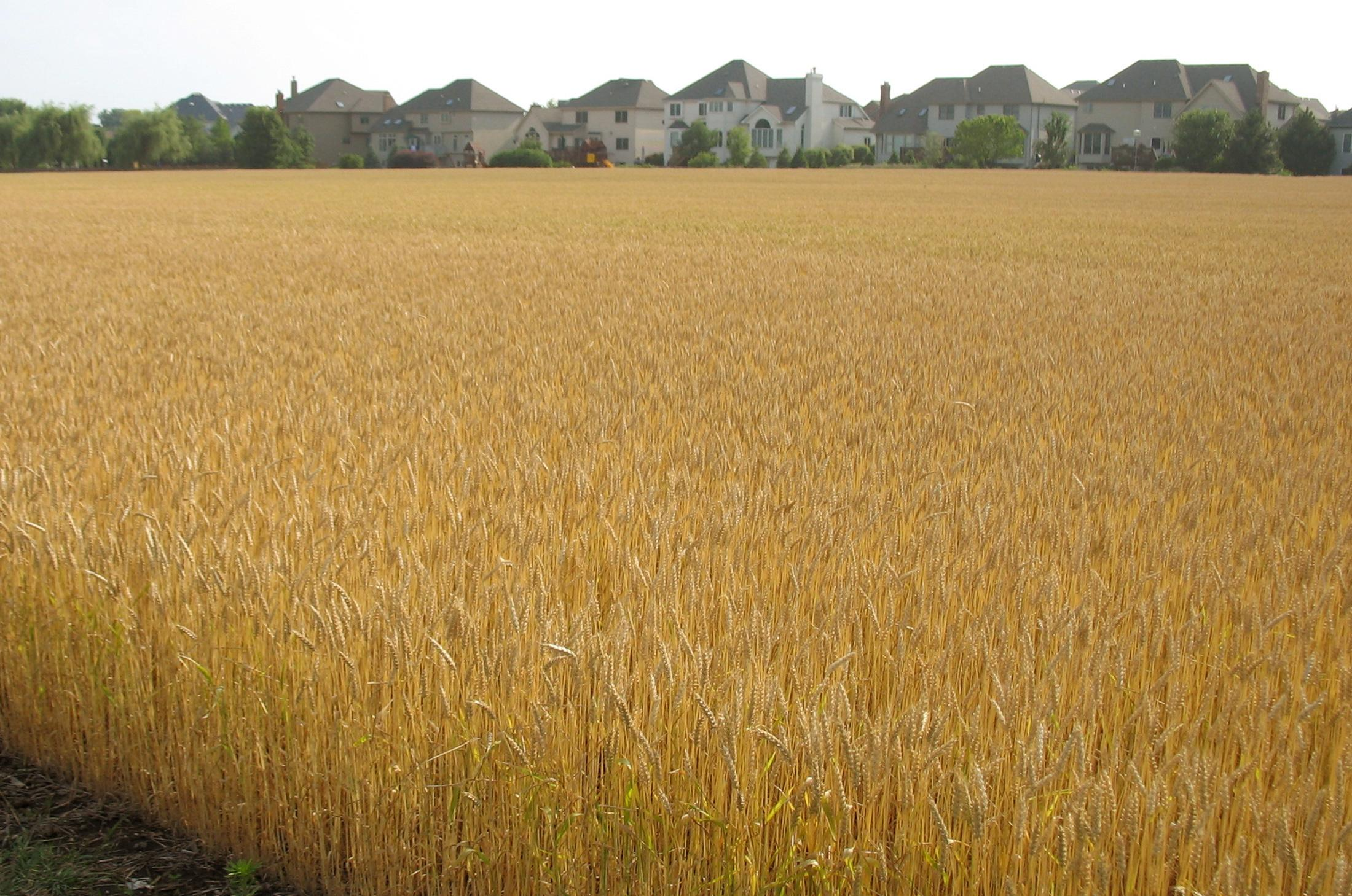 Column: Crop Watch - Harvest conditions finally improving in North...