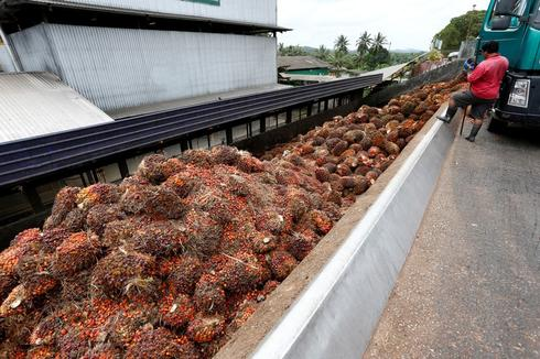 Malaysia says palm oil industry challenged to meet green standards by 2020