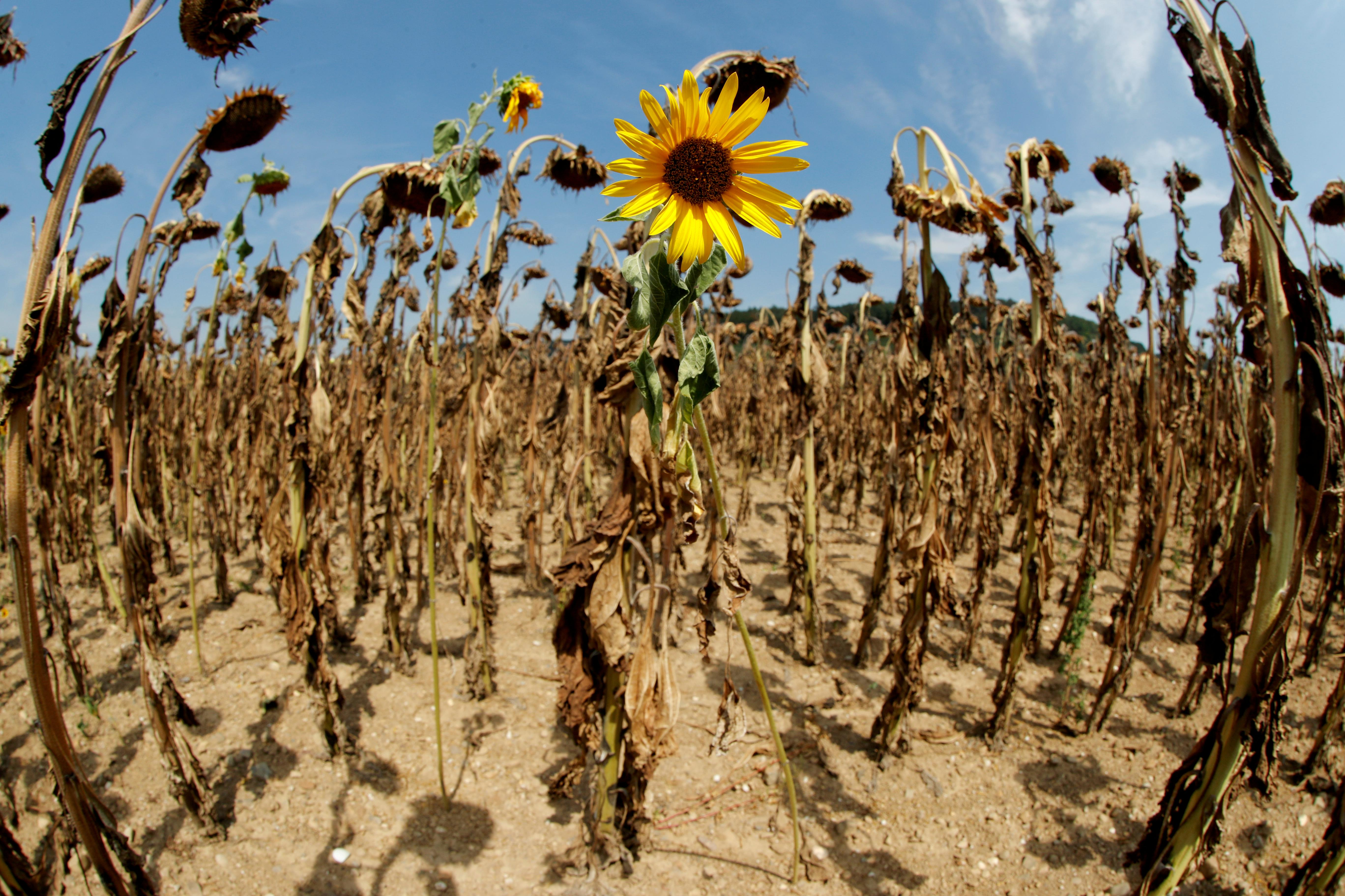 'Indiana Jones' scientists collect seeds in wild for climate change...