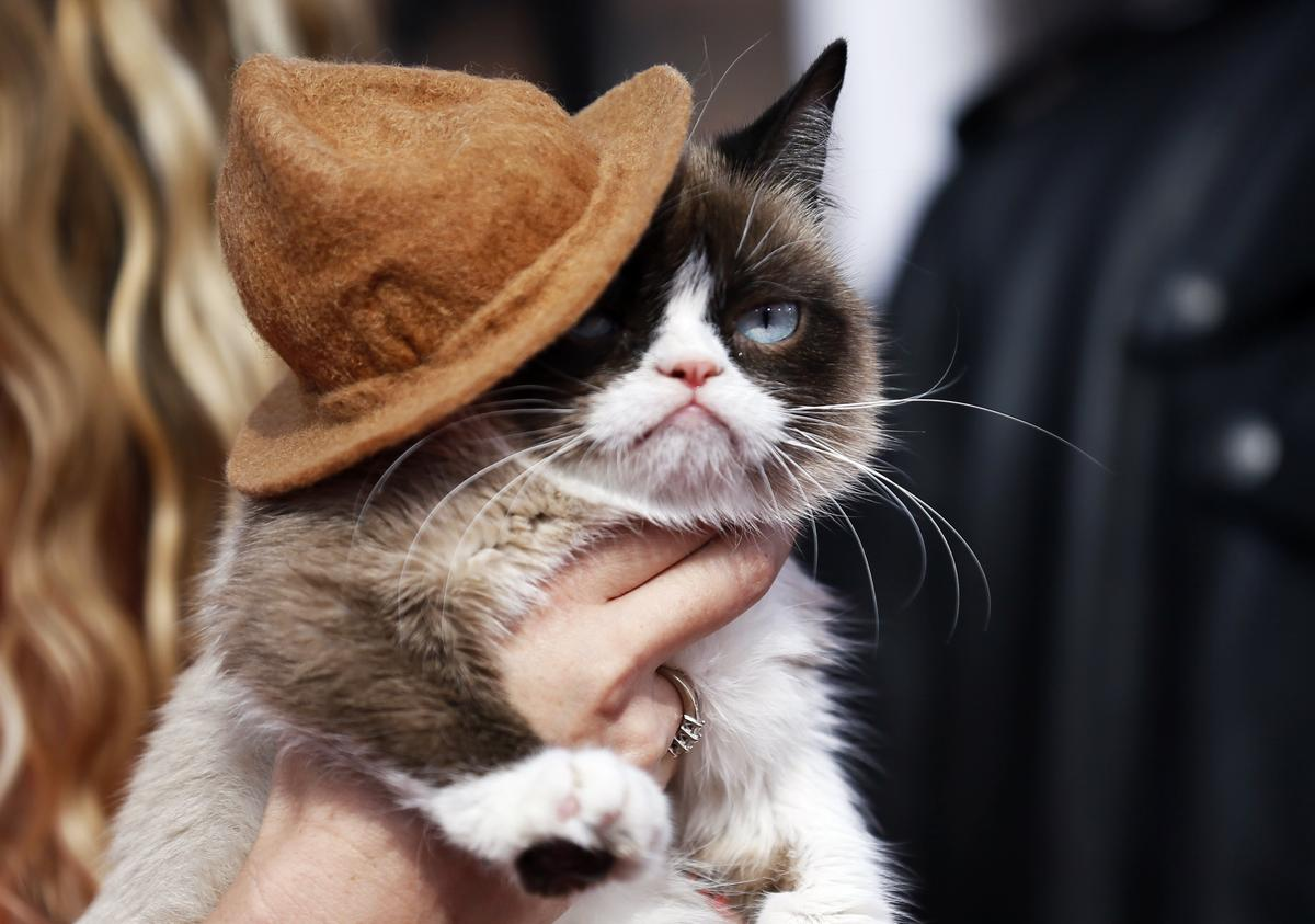 Grumpy Cat, lovelorn whale are stars of 2019's top animal stories