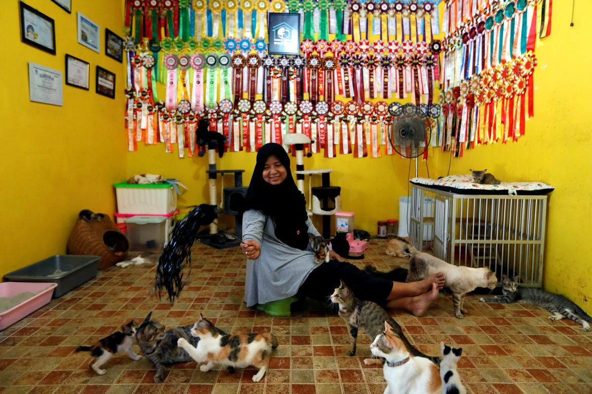 Indonesian housewife tackles homelessness for 250 feral cats