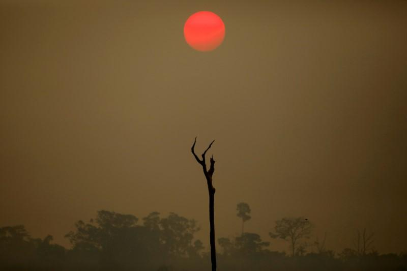 Amazon deforestation could speed up in 2020: expert