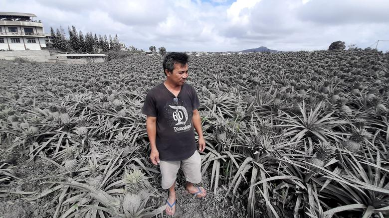 El granjero Jack Imperial, de 49 años, posa para un retrato en su plantación de piña cubierta de cenizas del volcán Taal en erupción, en Tagaytay, Filipinas, el 15 de enero. Imperial dijo que temía que la ceniza caliente hubiera dañado su cosecha y la hiciera no comestible.  Solía vender sus piñas, en rodajas, trozos y jugo, en un pequeño puesto frecuentado por turistas al lado de su casa.  Pero los turistas han desaparecido y decenas de miles de personas han sido evacuadas de una zona de peligro alrededor de Taal.  REUTERS / Adrian Portugal