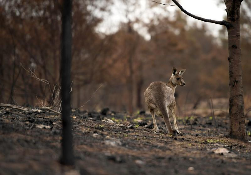 The Australian government will help the tourism industry as forest fires recede