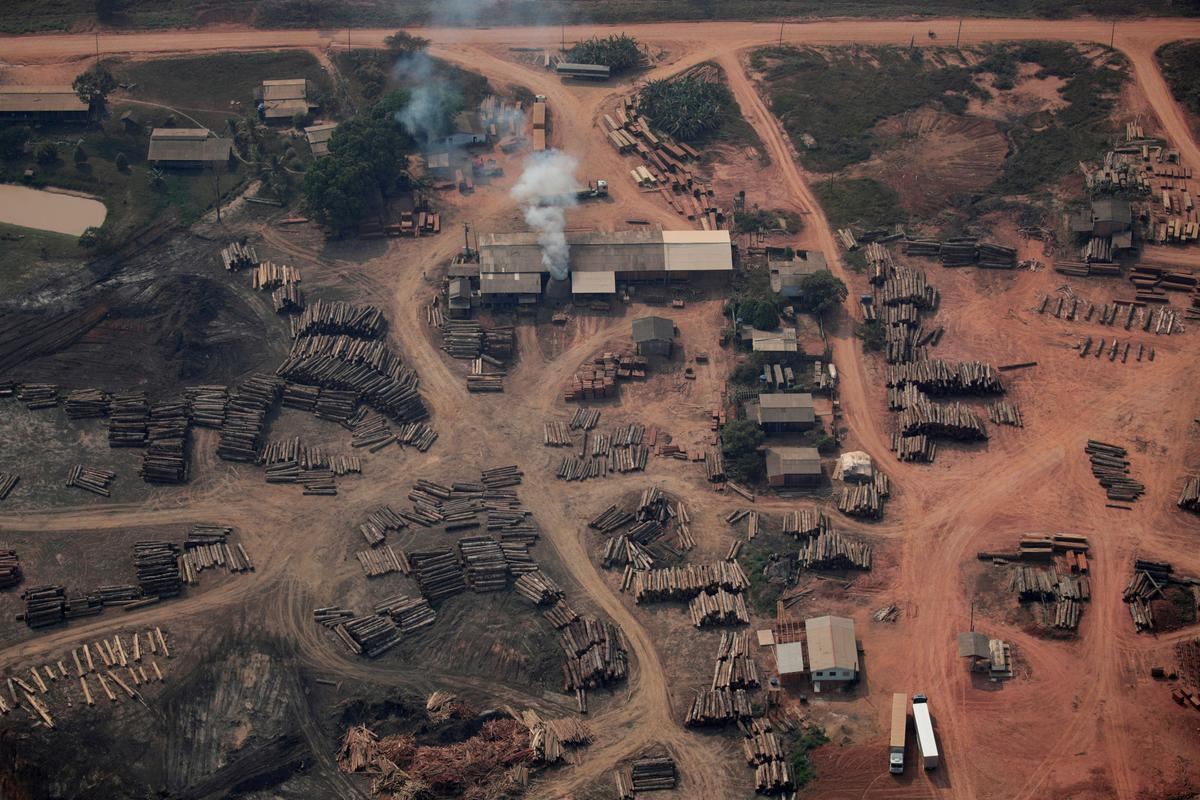 Brazil authorizes national security force to fight deforestation