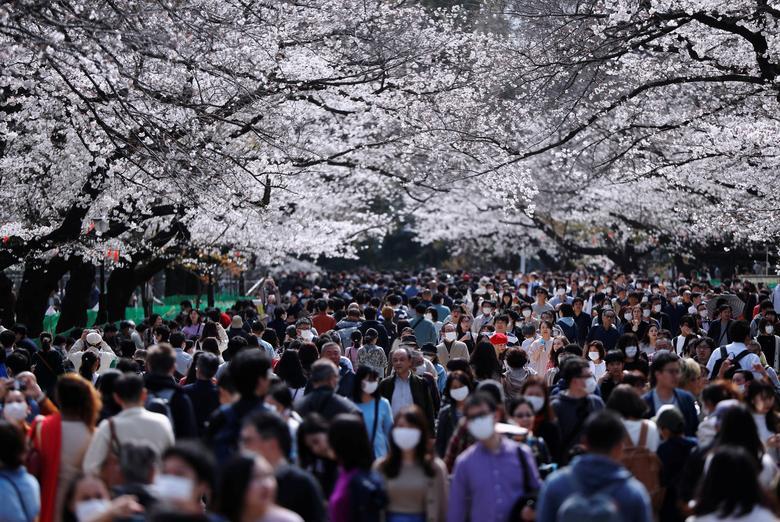 Посетители в защитных масках после вспышки коронавирусной болезни смотрят на цветущие вишни в парке Уэно в Токио, Япония, 22 марта 2020 года. REUTERS / Issei Kato